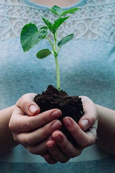 plantera-ett-trad.jpg